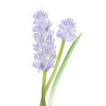 blue hyacinth bath bomb