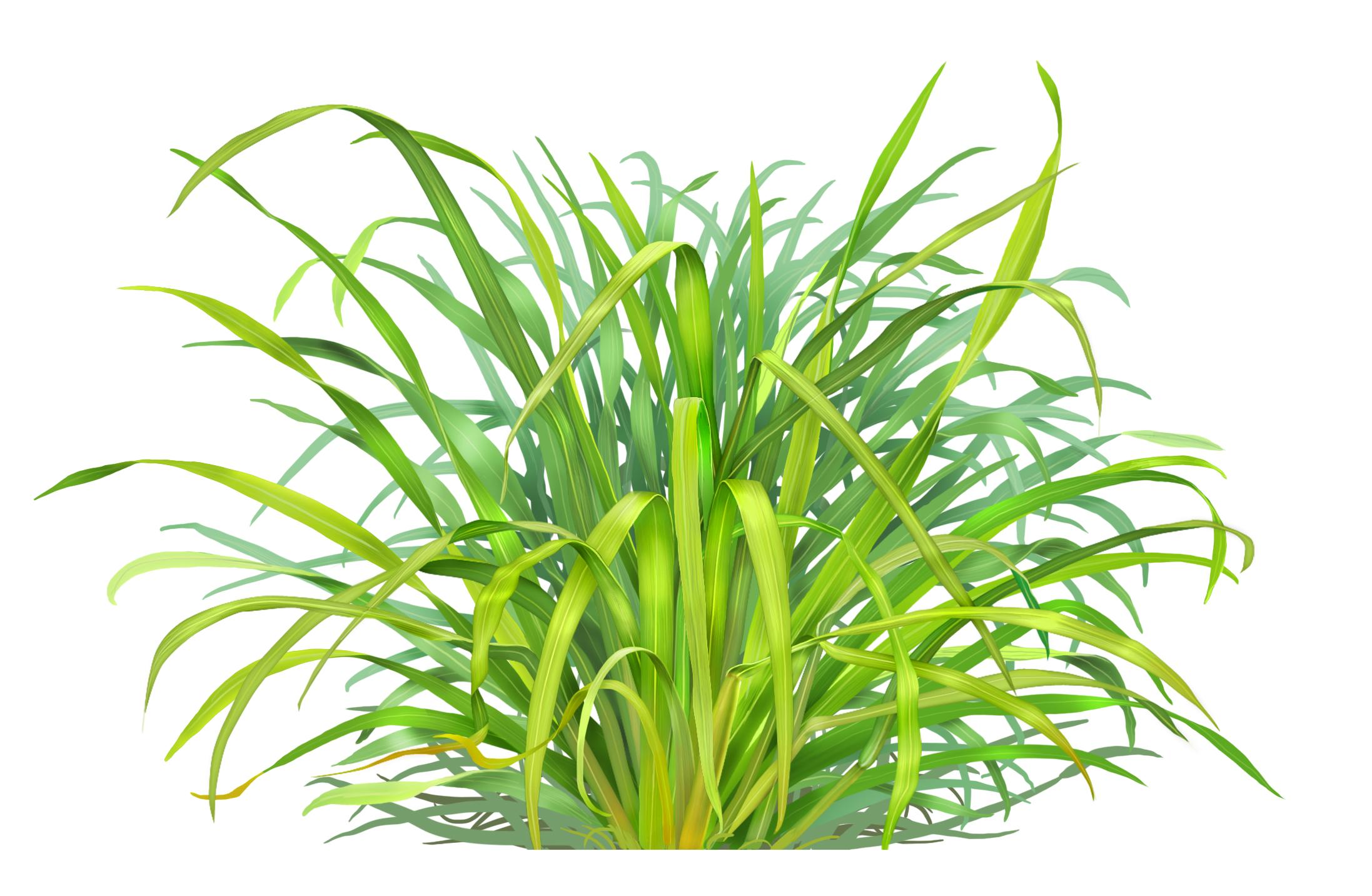 Lemongrass Amp Eucalyptus Bath Bomb Calla Lily Cosmetics
