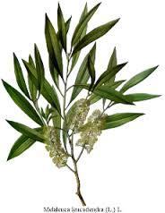 CL Cosmetics CL Skin Calla Lily Cosmetics Acne tea tree
