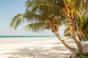 Caribbean Escape Sugar Scrub